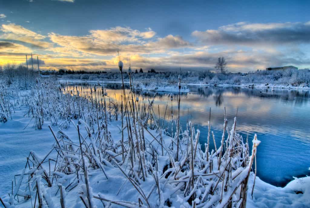 Deschutes River in Winter| the johnsons plus dog