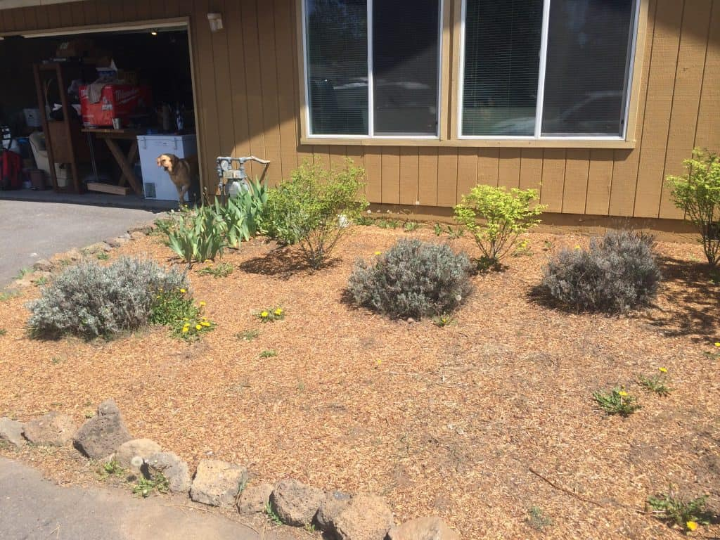 Read about the simple solution into transforming this flower bed!!