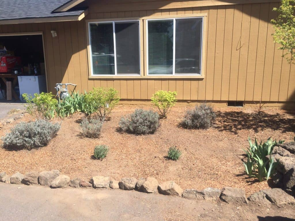 How we transformed our flower bed using dark mulch