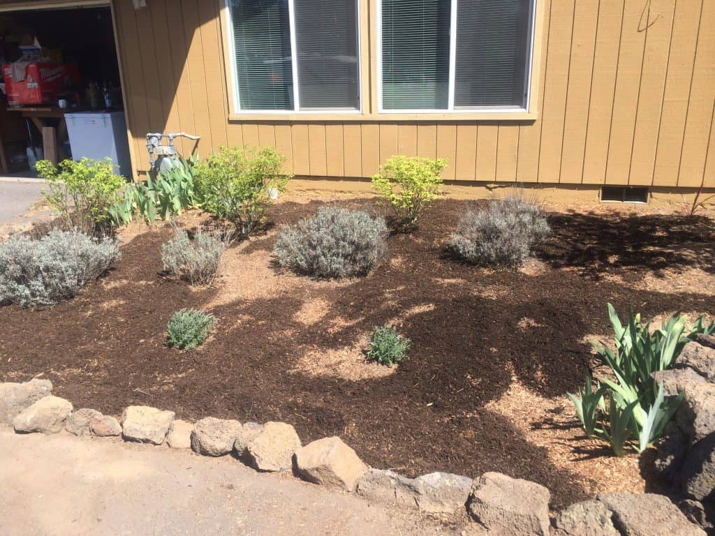 Using dark mulch makes a huge difference on this flower bed