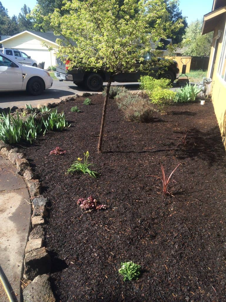 How we transformed this flower bed in just one day!