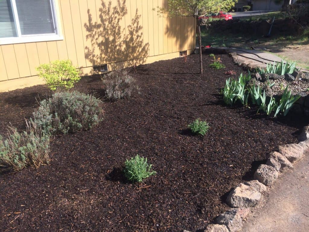 a patch of dirt and mulch with a few scattered plants in front yard
