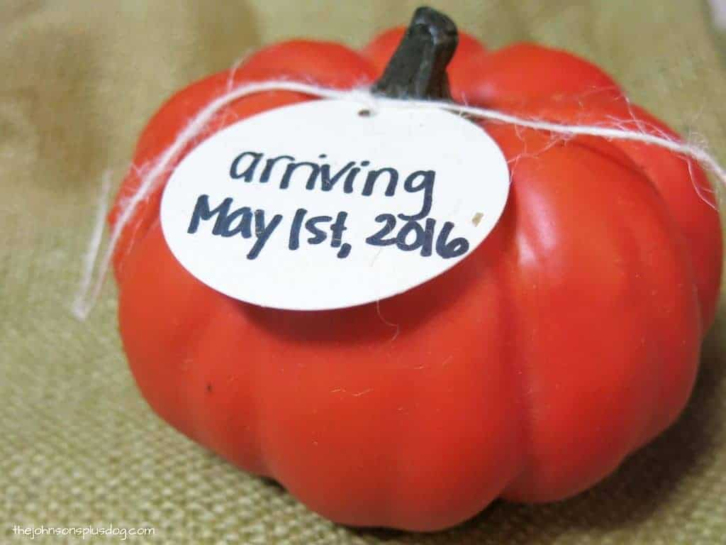 Close up shot of mini faux orange pumpkin with a tag around the stem that says arriving May 1st, 2016 as a Halloween pregnancy annoucement