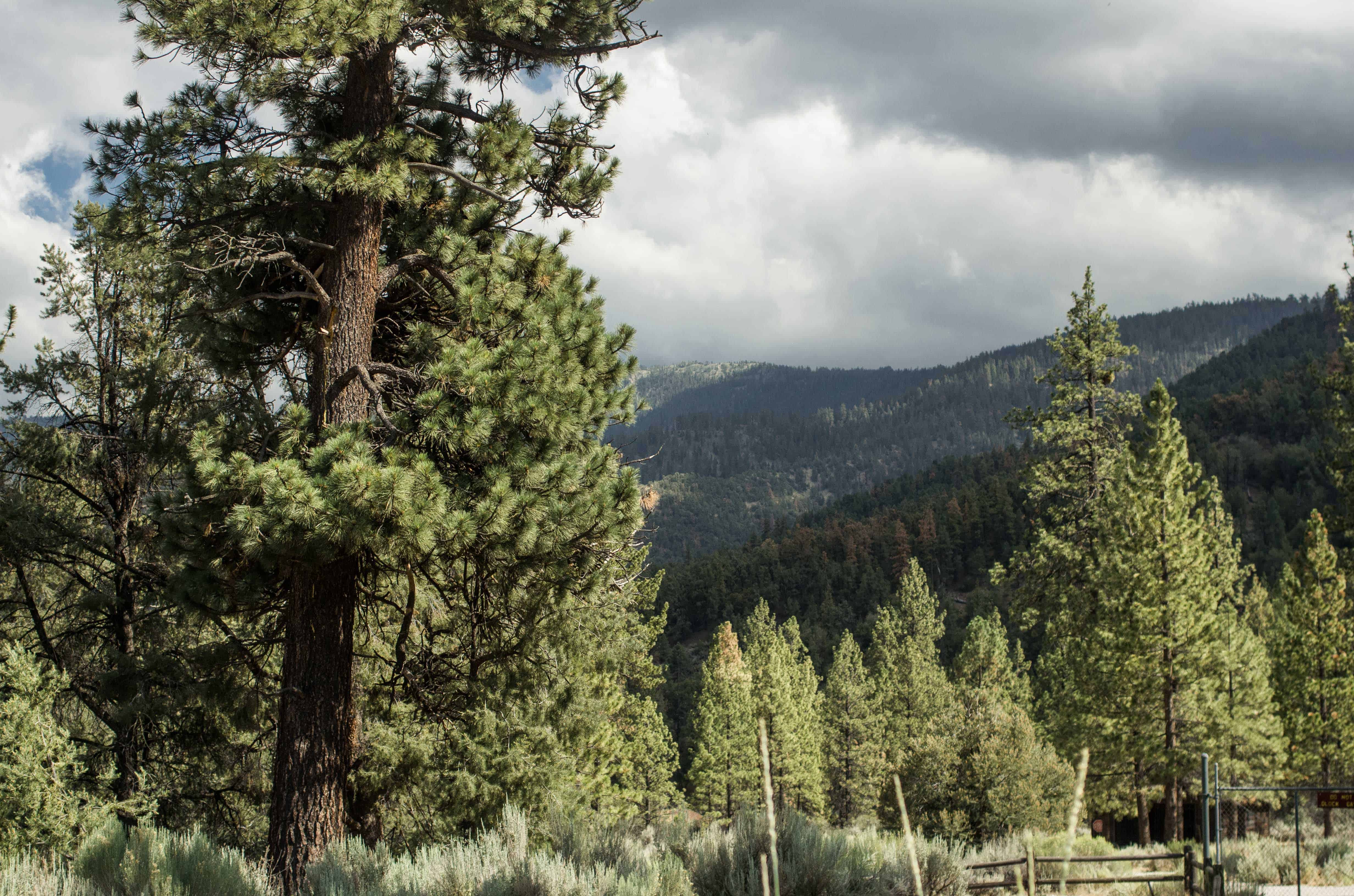 pine mountain club dating Find pine mountain club, ca real estate for sale today, there are 159 homes for sale in pine mountain club at a median listing price of $295,000.