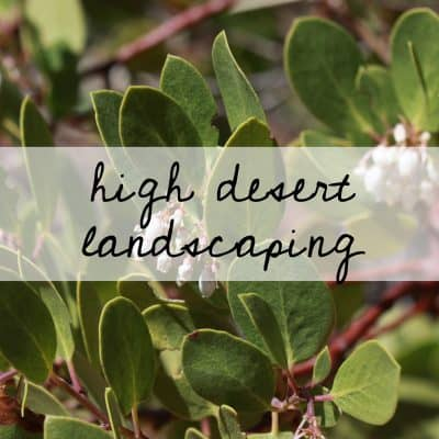 High Desert Landscaping | the johnsons plus dog