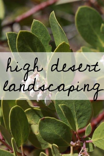 High Desert Landscaping   the johnsons plus dog