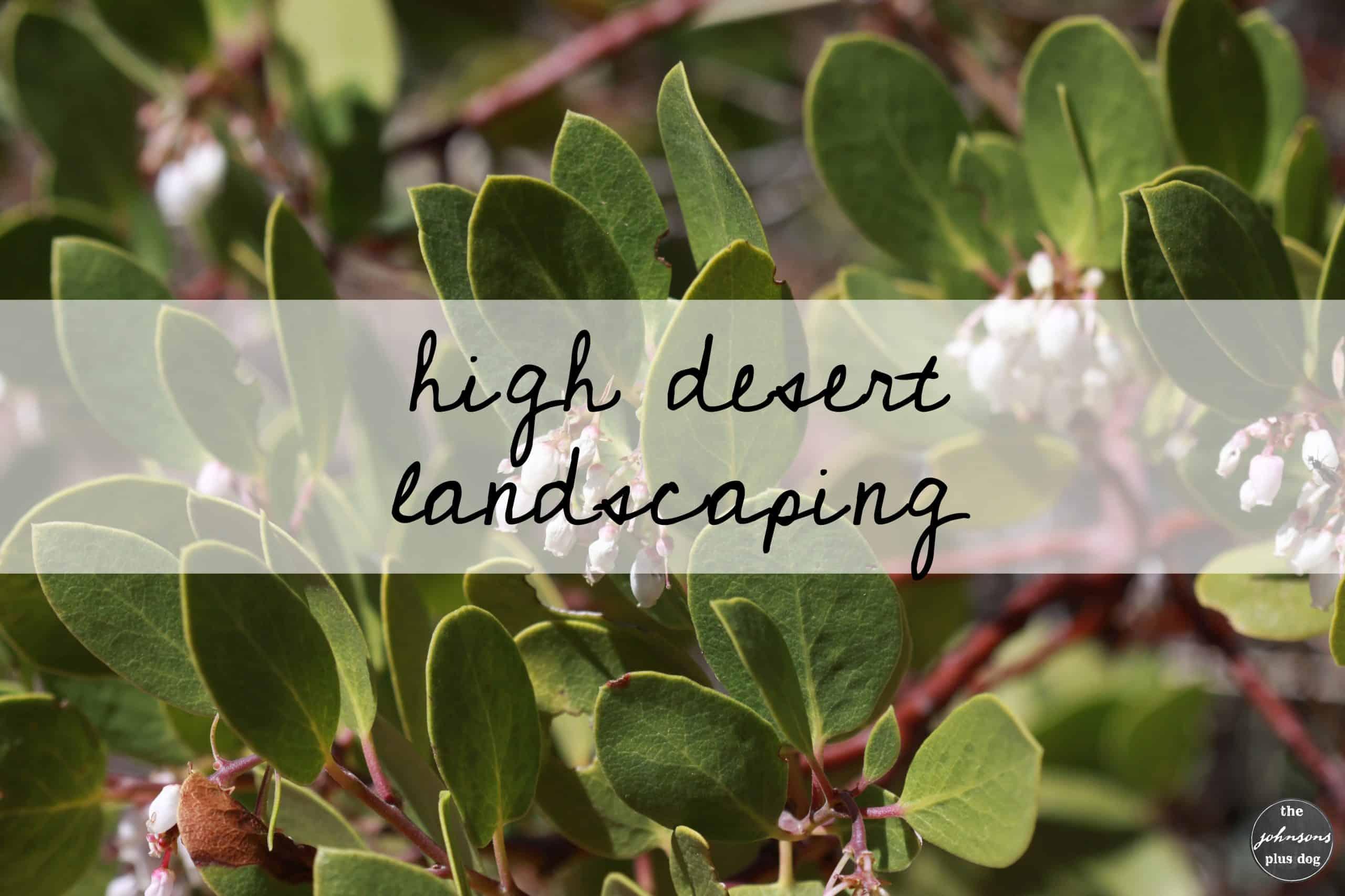 High Desert Landscaping | the johnsons plus dog