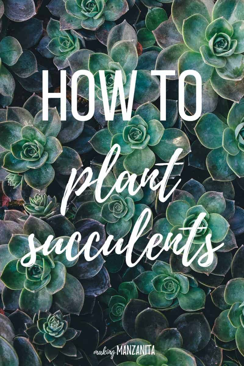 How to plant succulents | Succulent growing tips | How to plan succulents outside | How to create a succulent garden | Growing succulents outside | Succulent planting tips | How to grow succulents | Tips to keep succulents healthy | DIY Succulent planter | Planting succulents