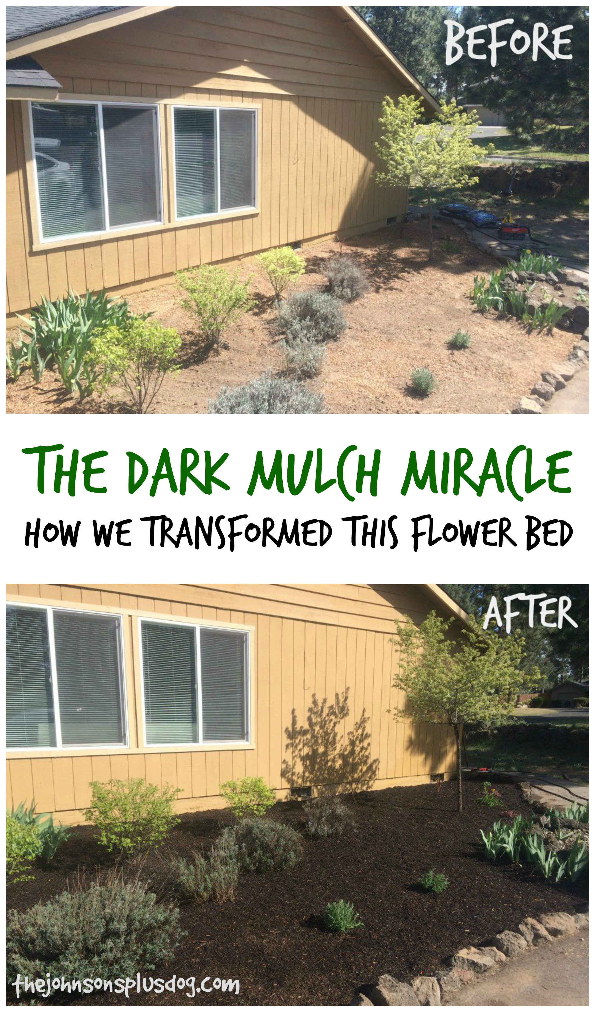 "Before and After Photos of Flower Bed Transformation. Text overlay in the middle says "" The dark mulch miracle : how we transformed this flower bed """