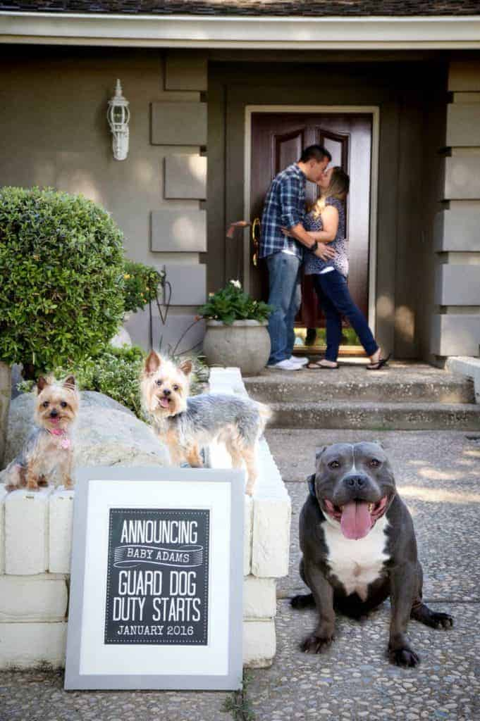 sign in frame that says announcement baby adams guard dog duty starts january 2016 with three dogs sitting next to the frame with mom and dad on front porch in background kissing