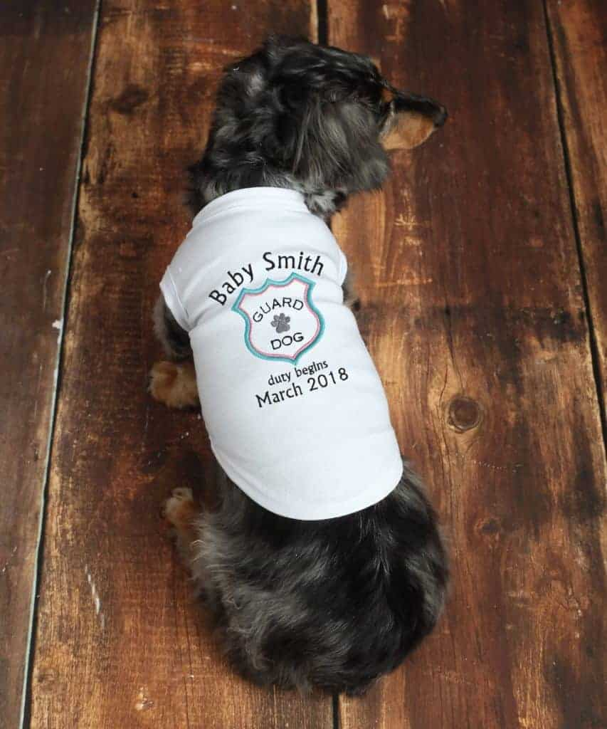 Small dog wearing stretchy t-shirt with customized screen print on it that says baby smith guard dog duty begins march 2018 to announce your pregnancy