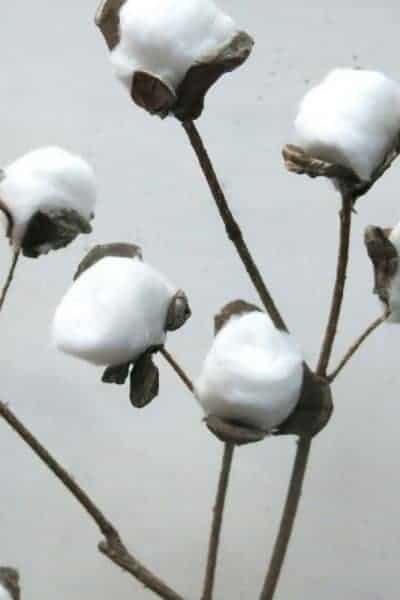 DIY Farmhouse Cotton Stems for $2