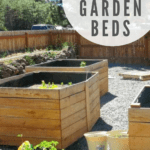 Side by side tall waist high cedar raised garden beds in the backyard with text overlay that says diy garden beds