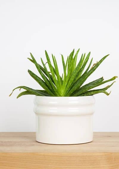 11 Modern Farmhouse Planters Under $50 You've Gotta Have