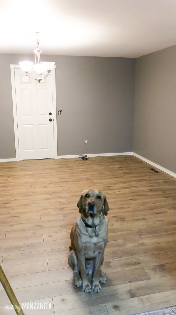 Dog sitting in the middle of empty gray room with laminate hardwood flooring