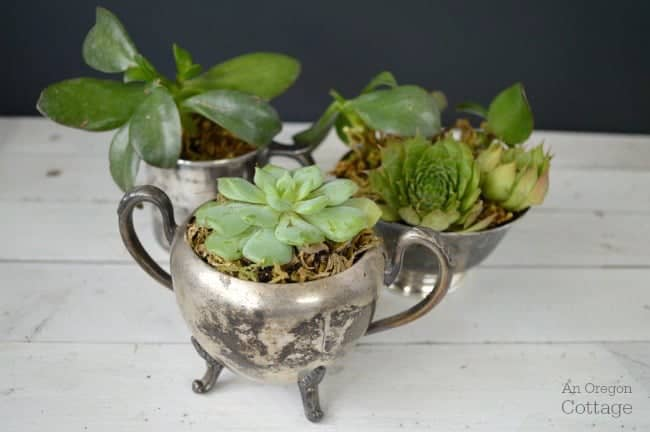 Vintage silver turned into succulent planters