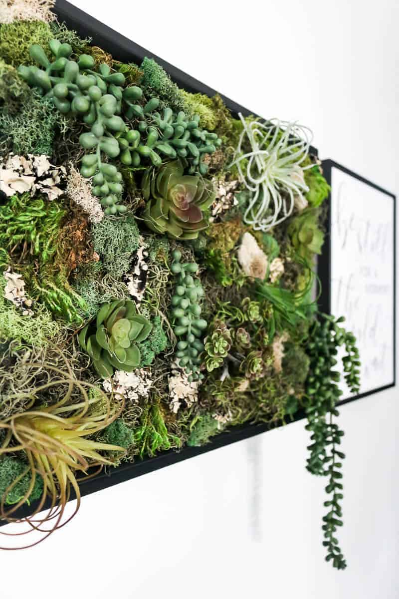 Close up shot of vertical garden full of fake succulents and moss in black frame on white wall