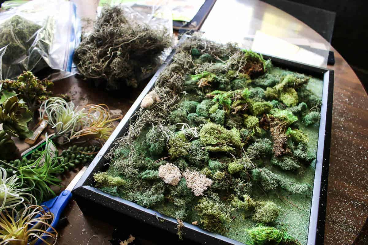 Floral foam, fake succulents and preserved moss placed inside the black shadow box for the DIY fake succulent wall decor