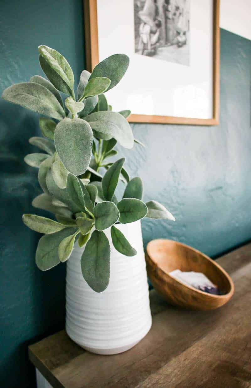 Indoor plant on a white vase beside a coconut shell.