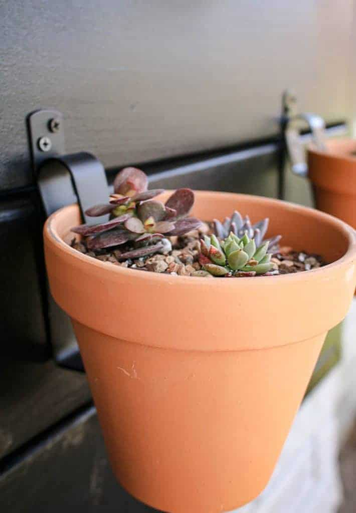 shows an up close picture of a succulent in a terracotta pot hanging from a black wood wall
