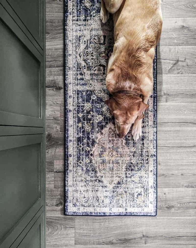shows a downward view of the Pantaleone Indigo Runner Area Rug. with a yellow lab laying on it with green doors next to it on gray wood floors