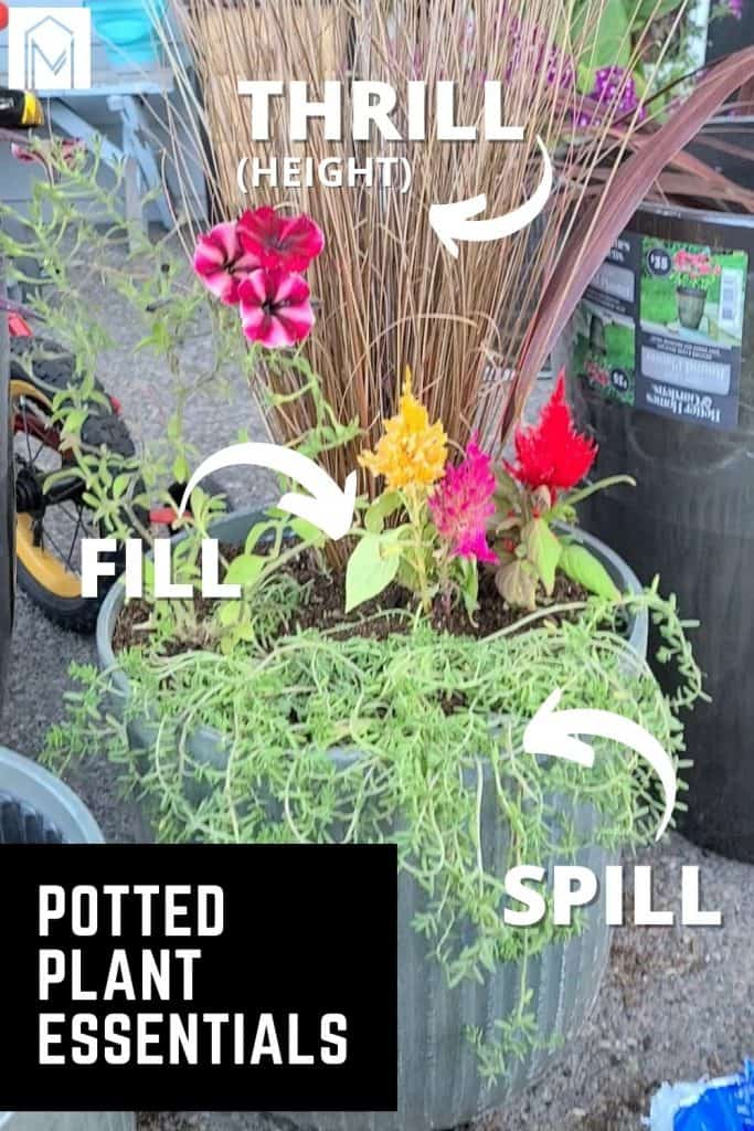 Potted plant with fresh flowers and plants added with arrows pointing to the different plants labeled thrill spill and fill with text overlay that says potted plant essentials