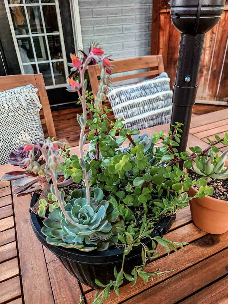 Large pot of succulents sitting in middle of wood table outside
