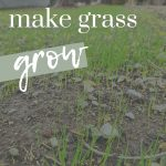 shows grass sprouts growing with overlay text that says how to make grass grow