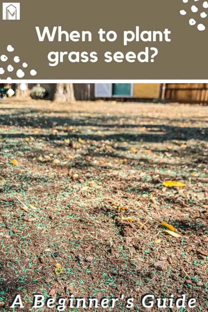 shows grass seed on dirt with overlay text that says when to plant grass seed, beginners guide